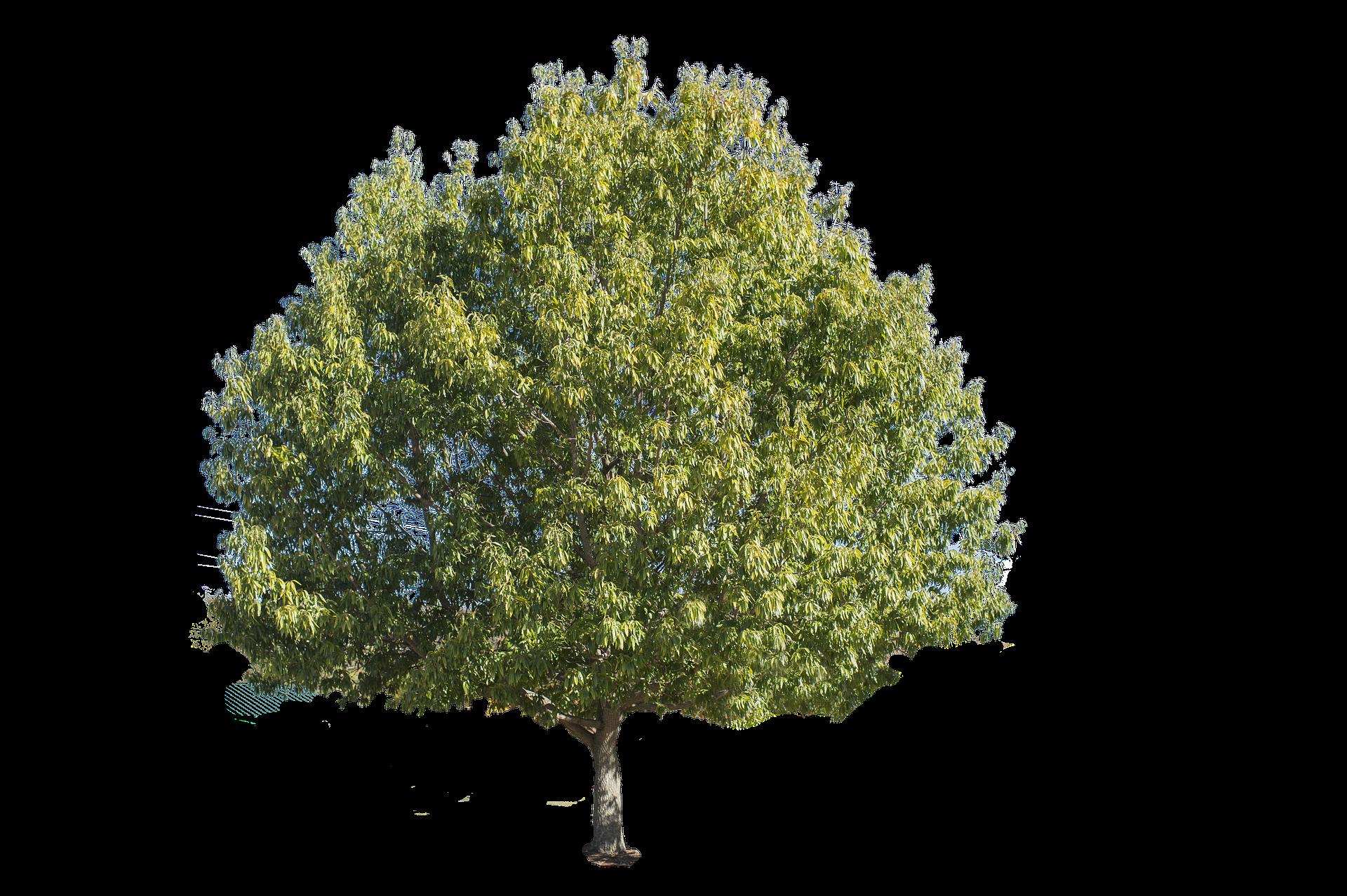 tree bountiful