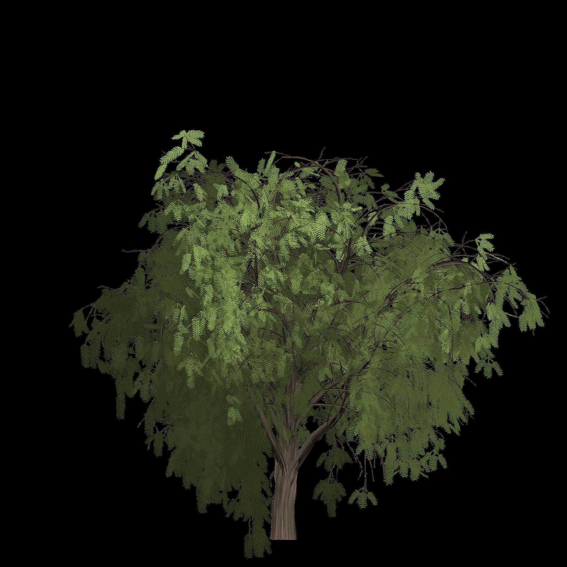 tree sagging